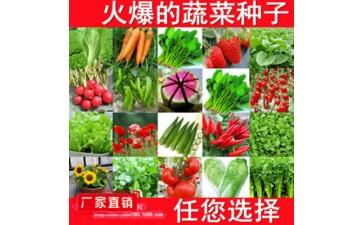 蔬菜种子_蔬菜种子 盆栽菜种子家庭菜籽包发芽-- 沭阳县新河镇花艺坊花卉园艺场