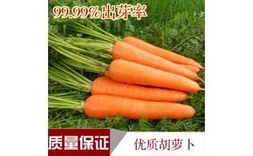 四季节菠菜苦苣_胡萝卜菜籽茴香韭菜油菜葱芹萝卜生菜黄瓜四季节菠菜