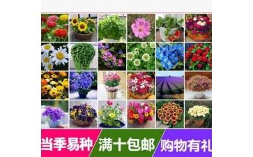 盆栽绿植_花种子易活室内阳台盆栽当季易种植物庭院花卉