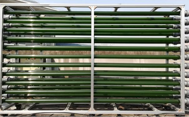 藻类生长测试