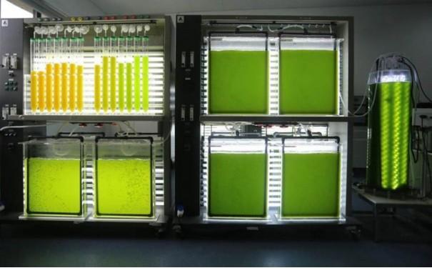 实验室藻类培养条件优化